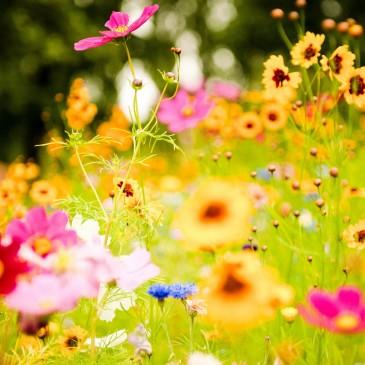 As energias da Primavera
