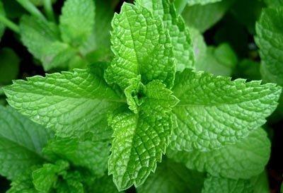 Benefícios do Chá de Hortelã para Saúde